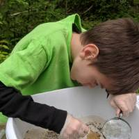 Student holds magnifying glass and looks at stream organisms in a bucket